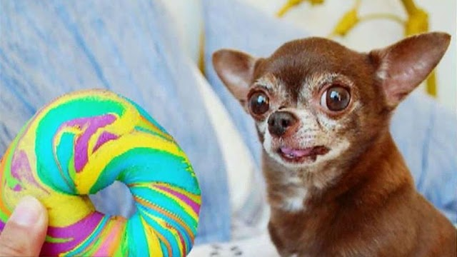 Trending FOX BUSINESS News: Tiny Chihuahua, huge social media following
