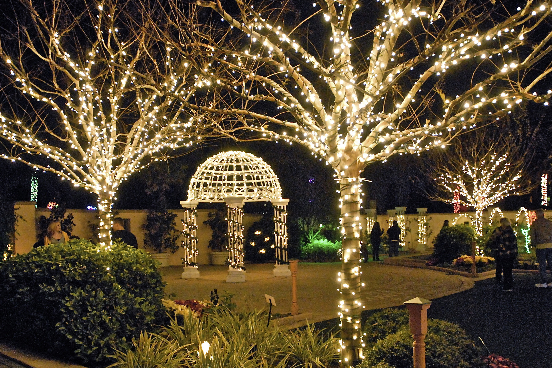 Pinellas  Holiday Lights in the Gardens  Florida Botanical Gardens