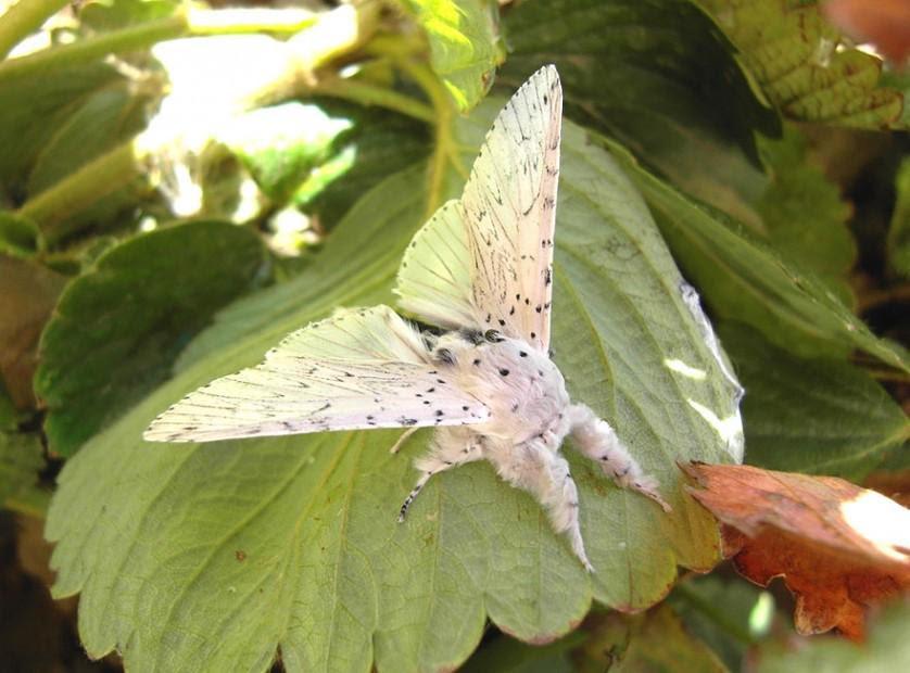 transformacao borboletas 10-