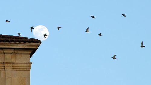 FALLING MOON by juanluisgx