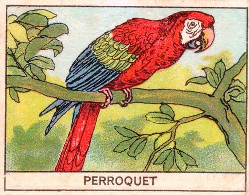 mart oiseaux114