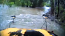 School Bus Carried Away by Floodwaters After Driver Appears to Ignore Warnings