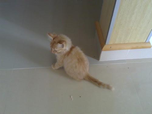 kucingn