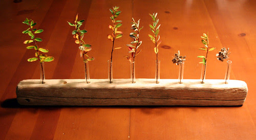 driftwood vase