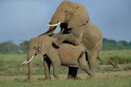 Foto Mesum, Binatang Kawin, Reproduksi Hewan