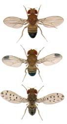 Sarah Palin's fruit flies