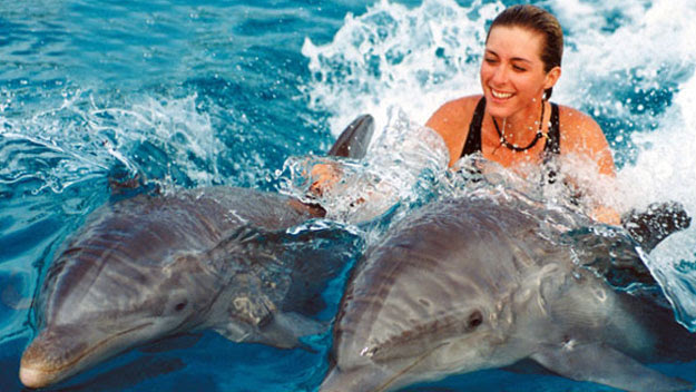 Woman swimming with dolphins