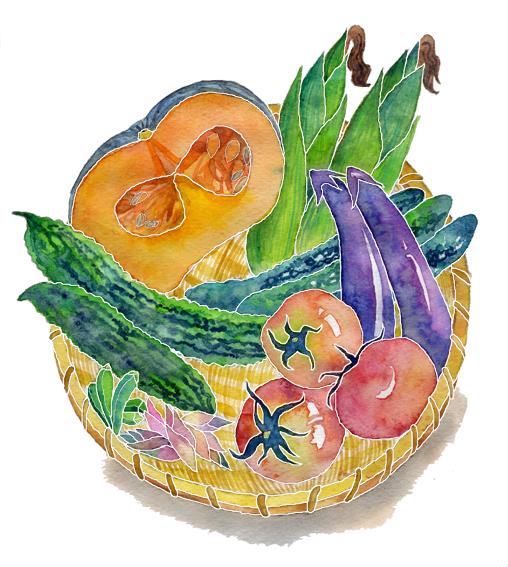 イラスト野菜 福岡で手書きイラスト制作を行っています主に