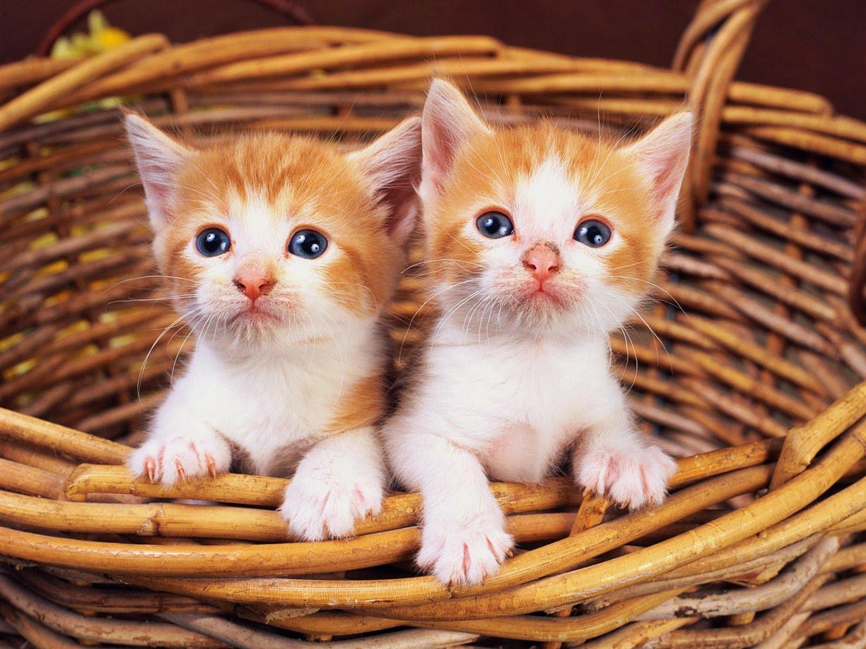Kedi Resimleri Resim Resimler Fotoğraflar Güzel Resimler