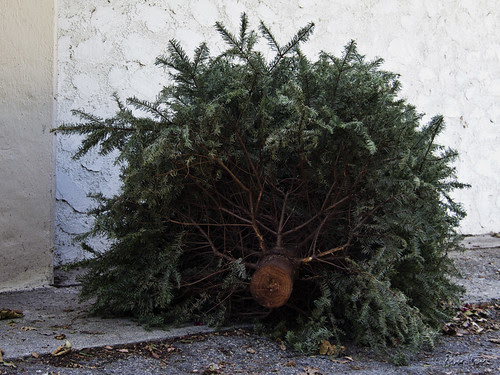 Christmas tree trash