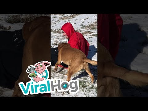 When The Dog Wants A Turn On The Sled - Video