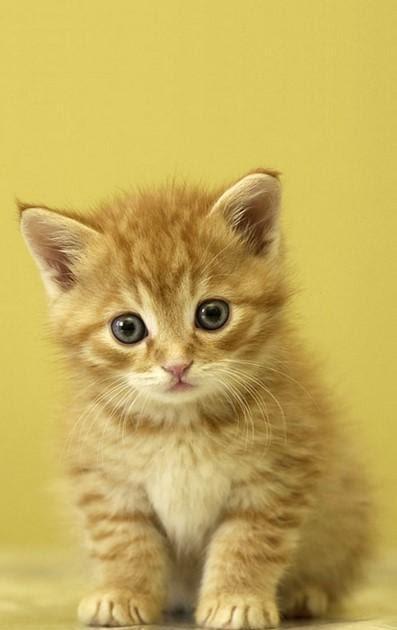 Download 9400 Wallpaper Android Kucing Hd Hd Gratid Wallpaper Keren
