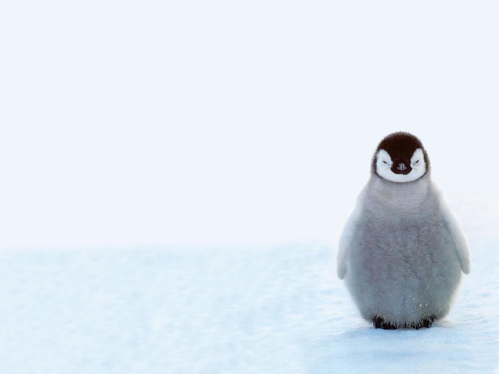 見ているだけで癒される ペンギンのかわいい高画質な画像まとめ