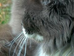 miss Cat Flower, 281005