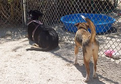 HarperLola_dogpark_42912b