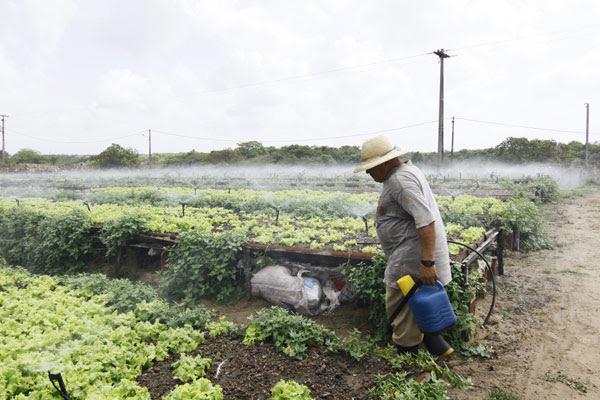 A maior área produtora de hortaliças da Grande Natal é a região de Gramorezinho, entre Natal e Extremoz, onde os produtores garantem que só usam agrotóxico com orientação técnica