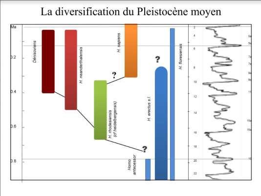 Au cours des derniers 900000ans, le genre «Homo» comportait plusieurs espèces. Seule la nôtre, «Homo sapiens», a survécu.