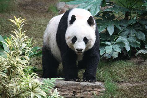 10 Almost Extinct Animal Species   REALITYPOD