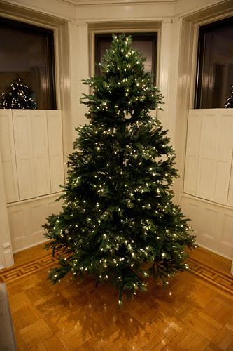 ChristmasTreeBalsamHill-11