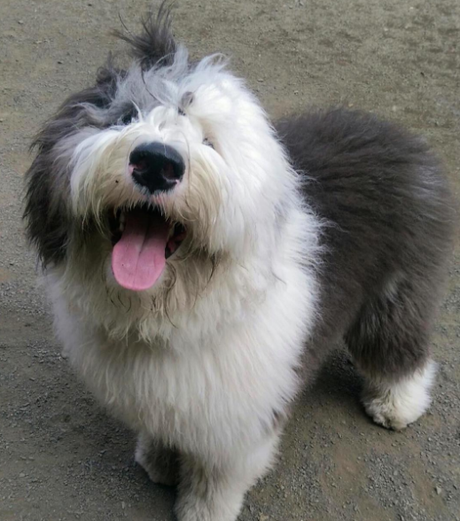 This dashing ball of fluff who has the most kissable nose the world has ever seen.