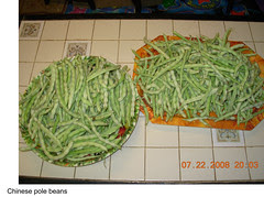 Garden Plot Shunguang Chinese beans on plates