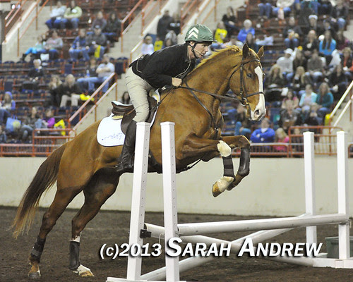 Alluring Punch and Steuart Pittman at the PA Horse World Expo