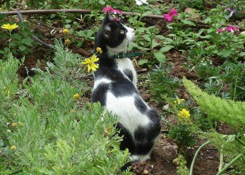 Missy in the garden