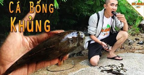 Kích điện bắt được cá Bống Khủng trong bụi rậm | Duy Jungle