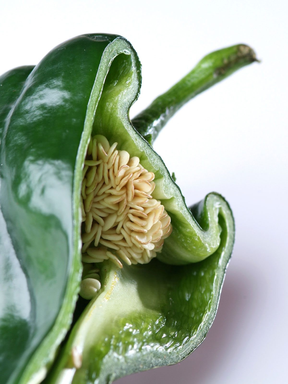 Pepper Seed Viability And Storage - How To Harvest Pepper ...