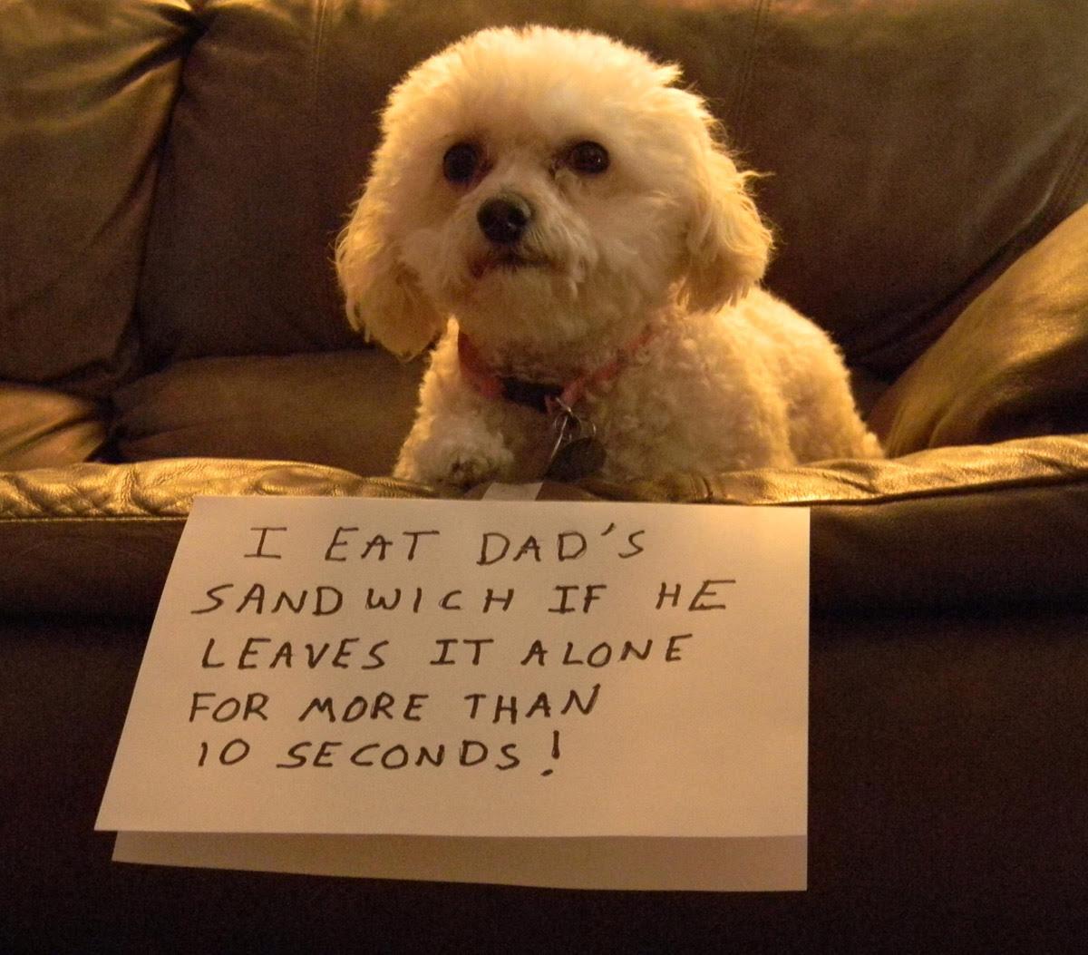 dog shaming 08 32 Hillarious Public Shaming of Dogs