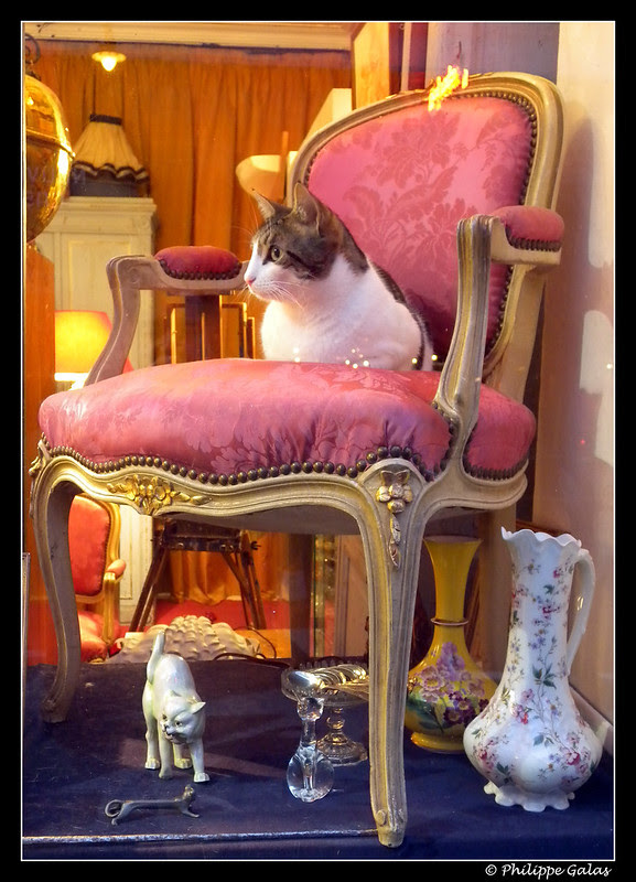 Chat de Boutique