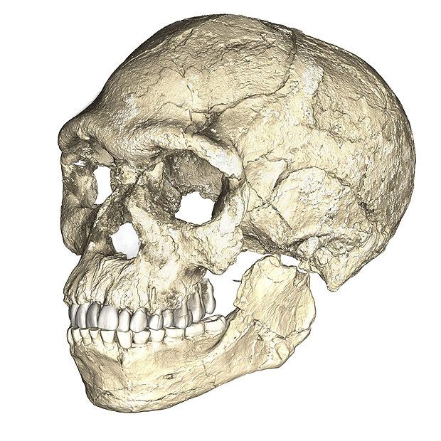 Novos dados revelam que o _Homo sapiens_ estava presente em todo o continente africano há 300 mil anos