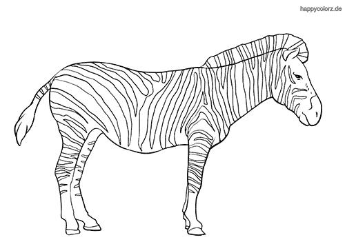zebra zum ausmalen