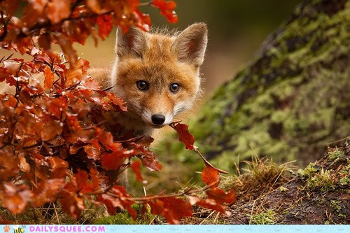 Firefoxfall.jpg (500×333)