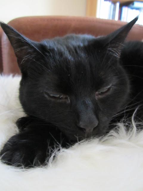 Flo snuggles into the fleece (4)