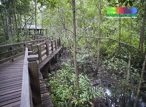 Mangrove Boardwalk at Sungei Buloh Wetland Reserve