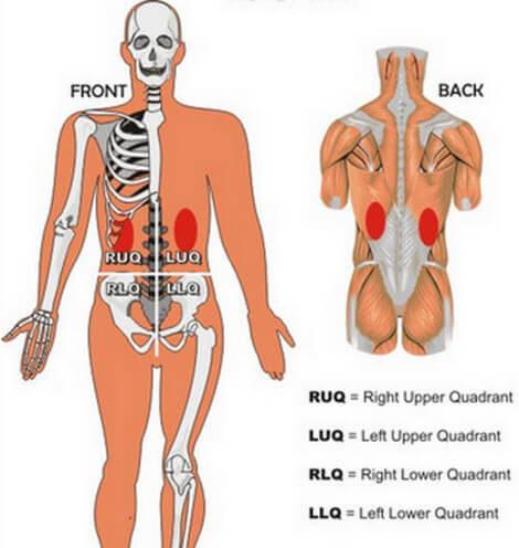 Kidney Pain Vs Right Left And Central Abdominal Pain La Vaca Cega