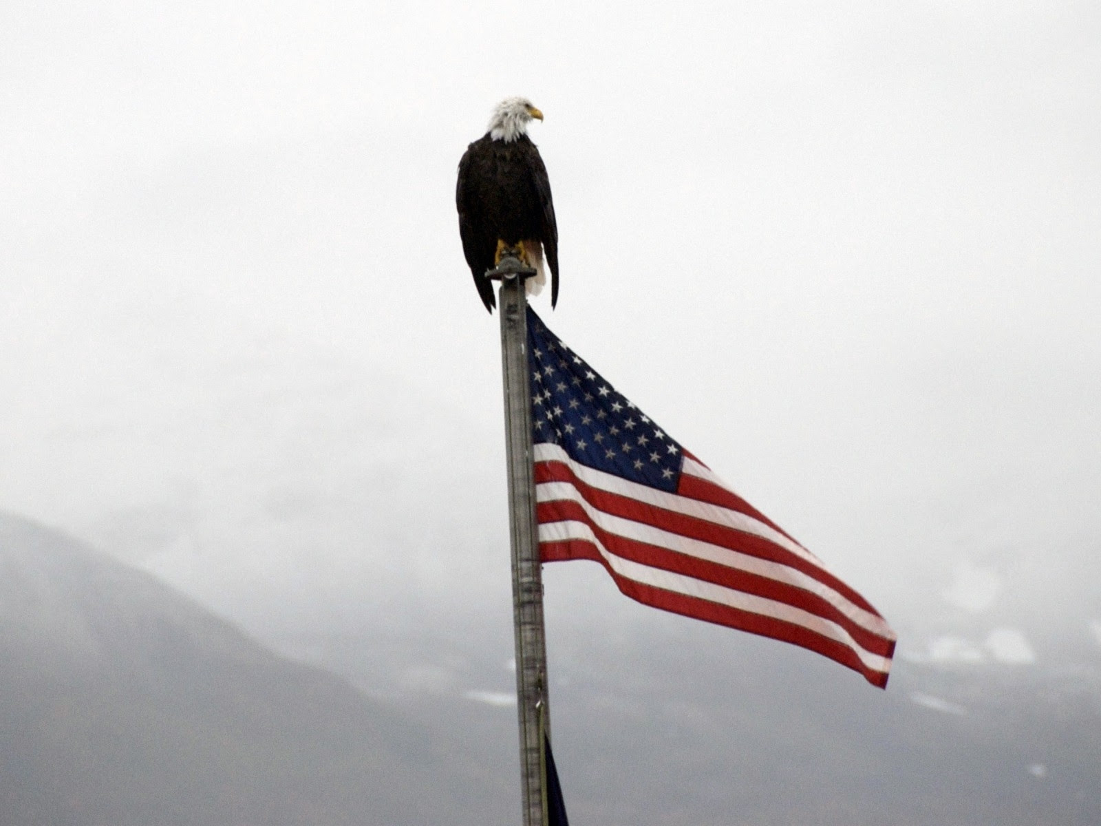Eagles Flags Usa 1600x1200 Wallpaper High Quality Wallpapers High