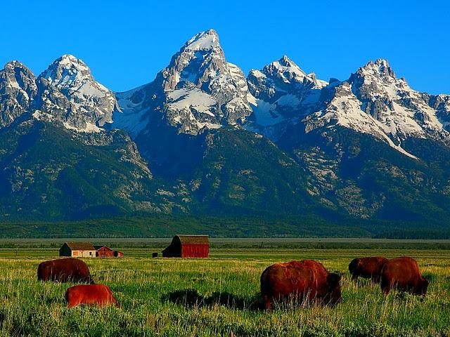 IMG_1632 Oh Give Me a Home Where the Buffalo Roam