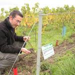 La Champagne s'apprête à faire sa révolution écologique