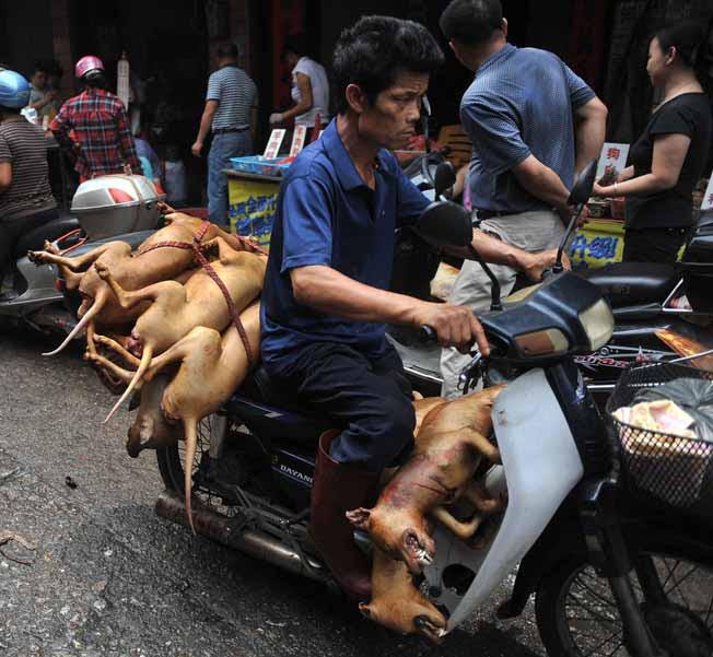 dog festival china