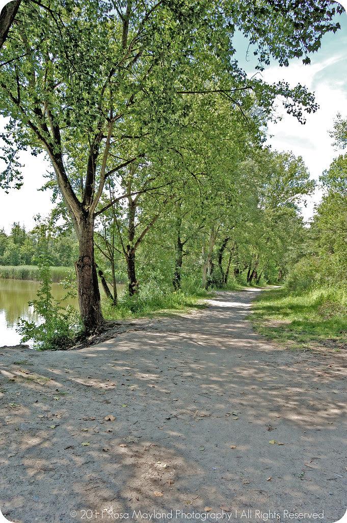 Zopf Path Arve 1 4 bis