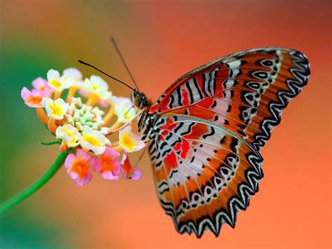 wallpapers butterfly desktop wallpapers