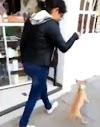 La grabaron arrastrando y pateando a una perrita 20 metros para forzarla a caminar