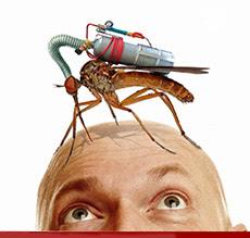 GMO komarac