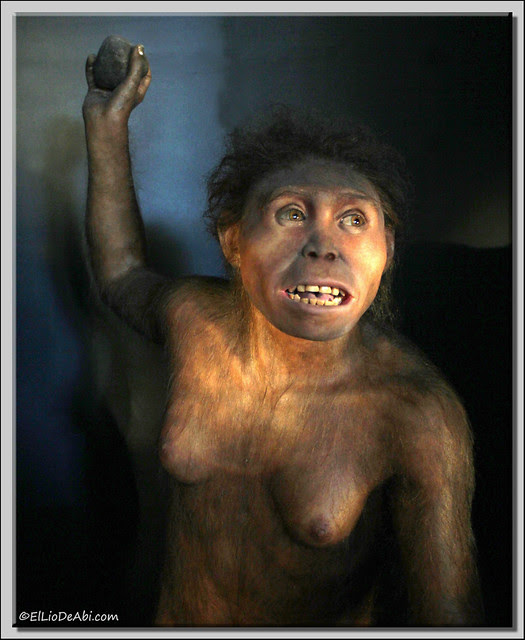 Museo Evolución Humana 36