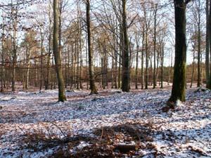Det börjar bli vinter på Söderåsen