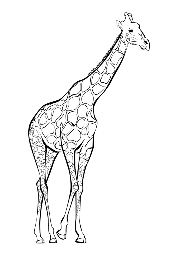 ausmalbilder drucken giraffe