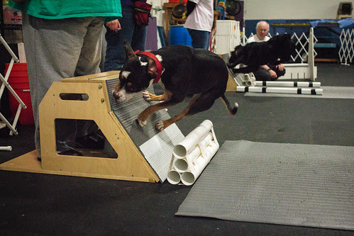 Flyball Practice April 2013-1519