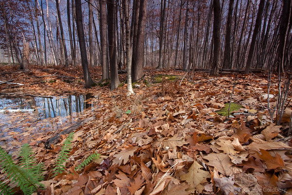 fallen leaves, trees, reflections, Acadia